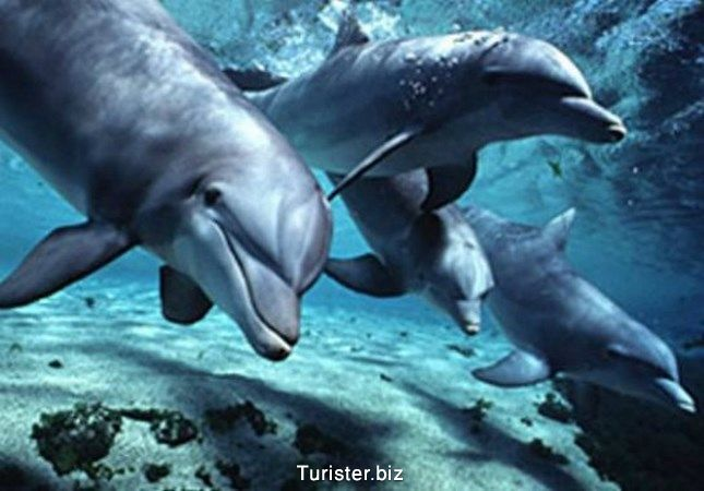 tenerife-silverpoint-whales-dolphins (Copy)